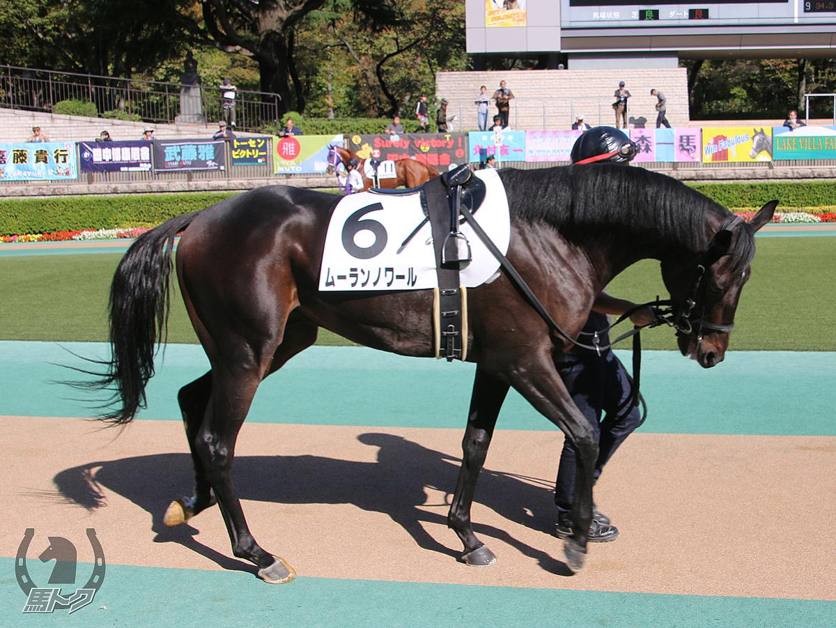 ムーランノワールの馬体写真