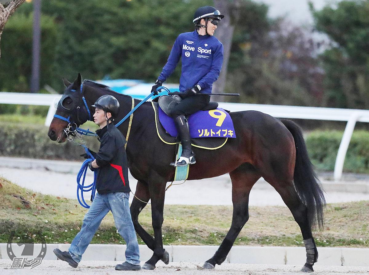 ソルトイブキの馬体写真