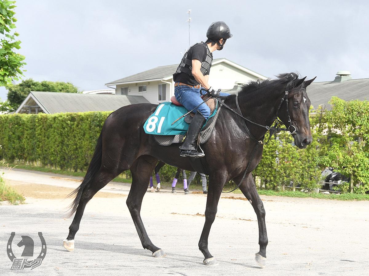 アイランドルビーの馬体写真