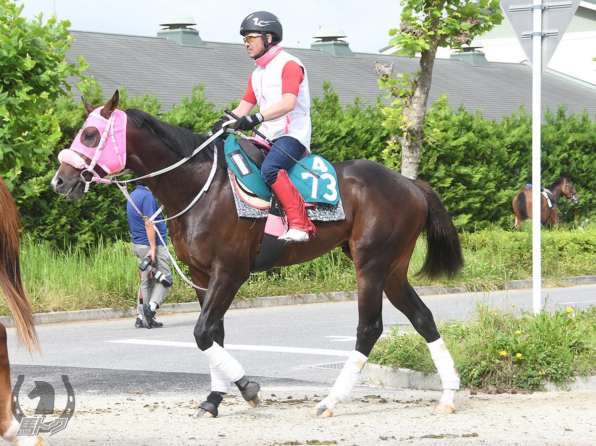 コウエイバンビーノの馬体写真
