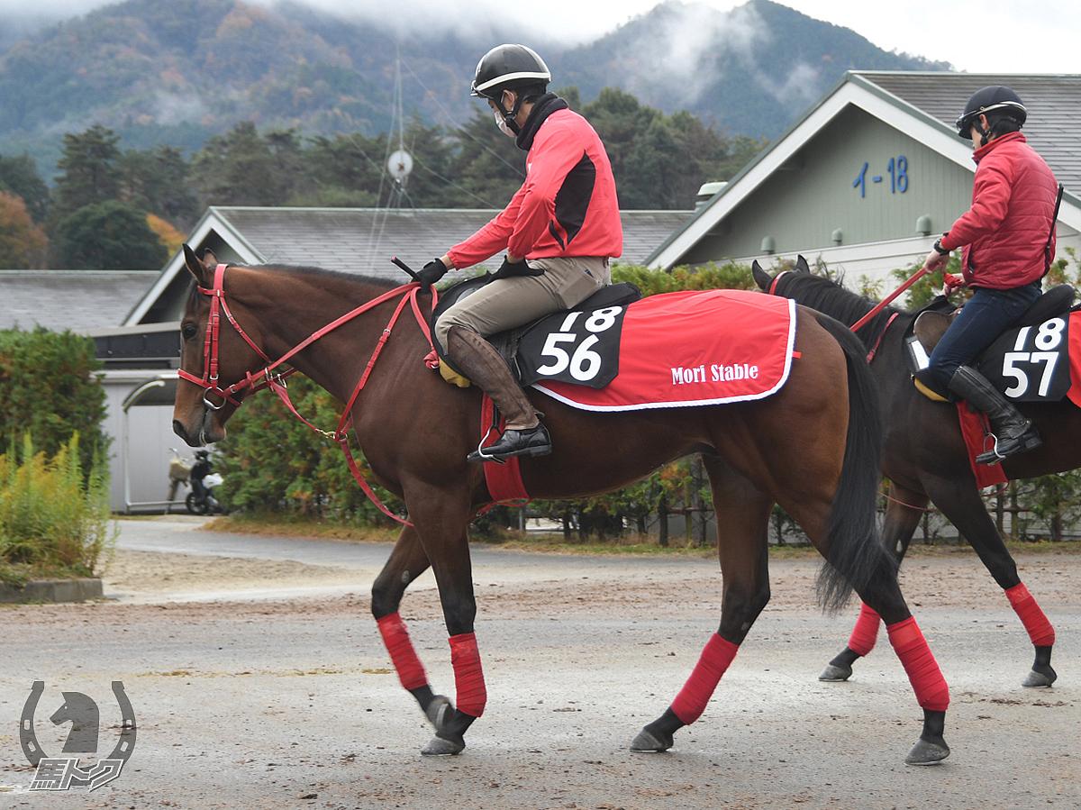 ジャスパーケイの馬体写真