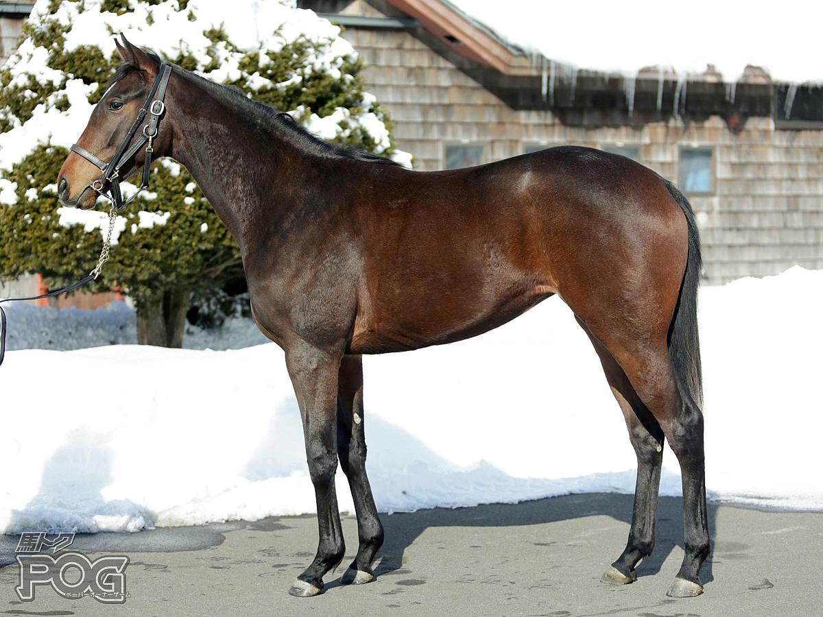 アドレの馬体写真