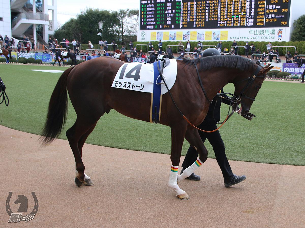 モッズストーンの馬体写真