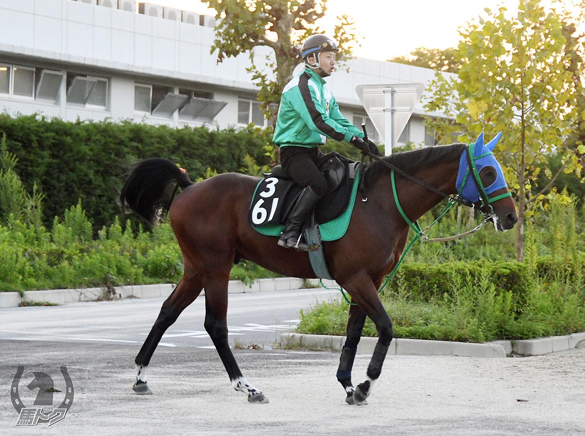 コパノカーネルの馬体写真