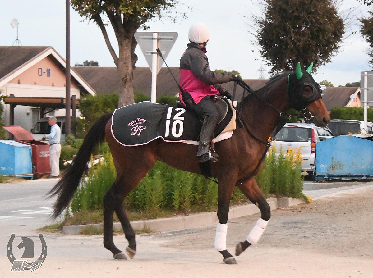 アルームスクレトの馬体写真