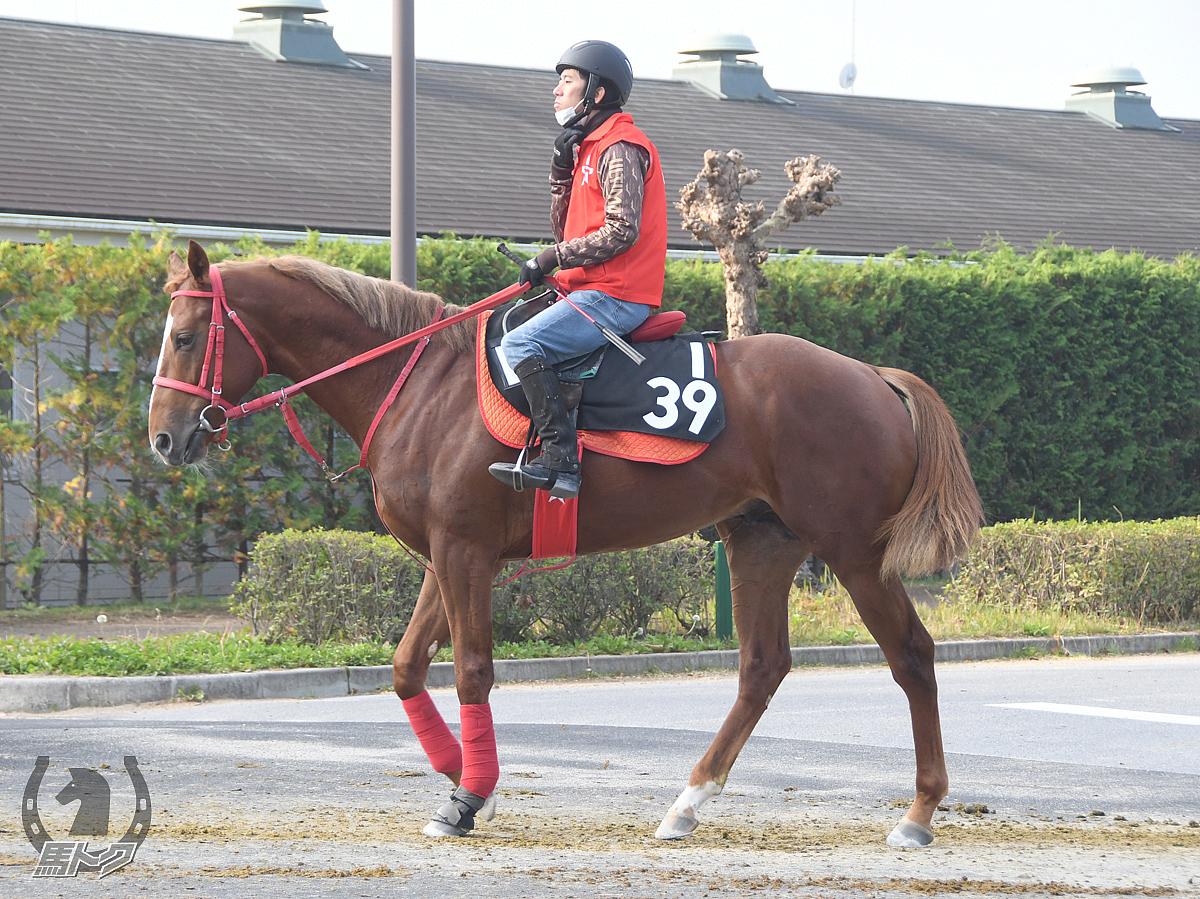 ウフフの馬体写真