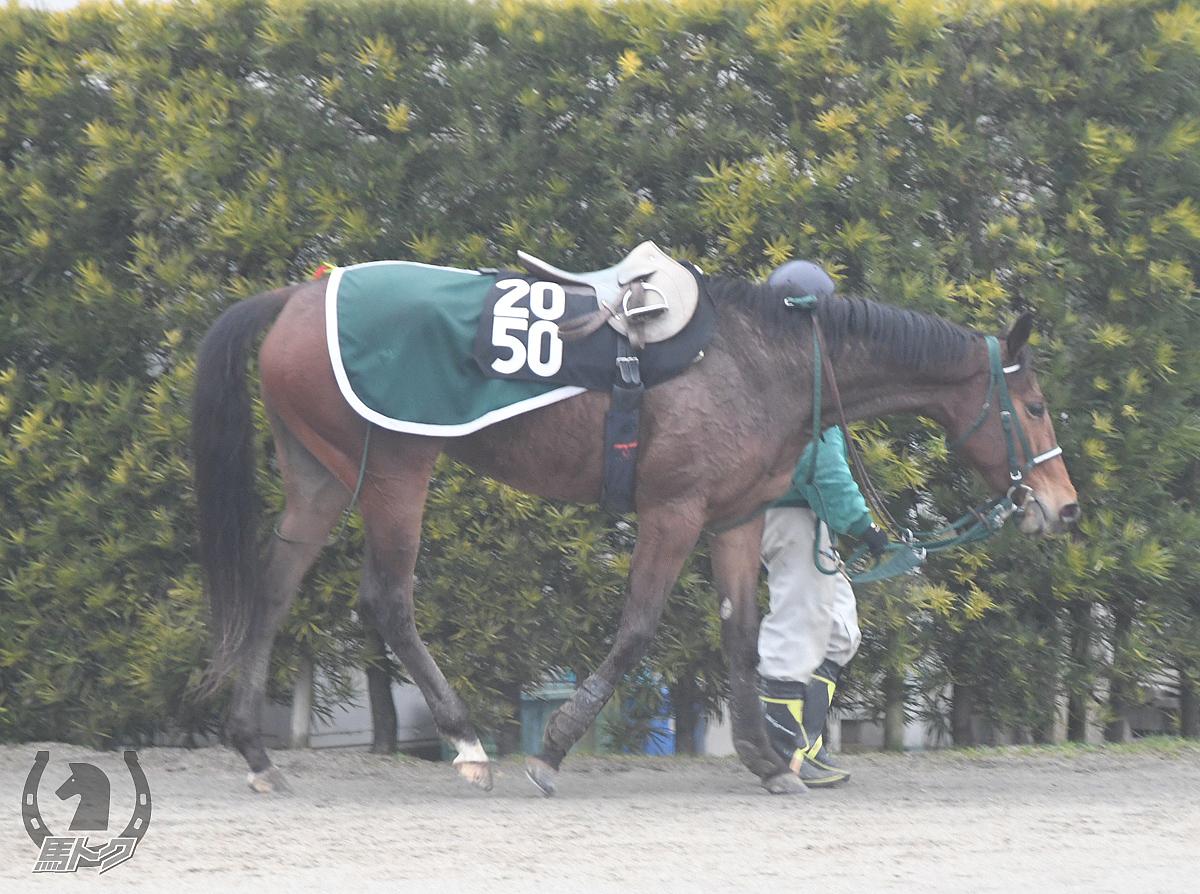 エストリルの馬体写真