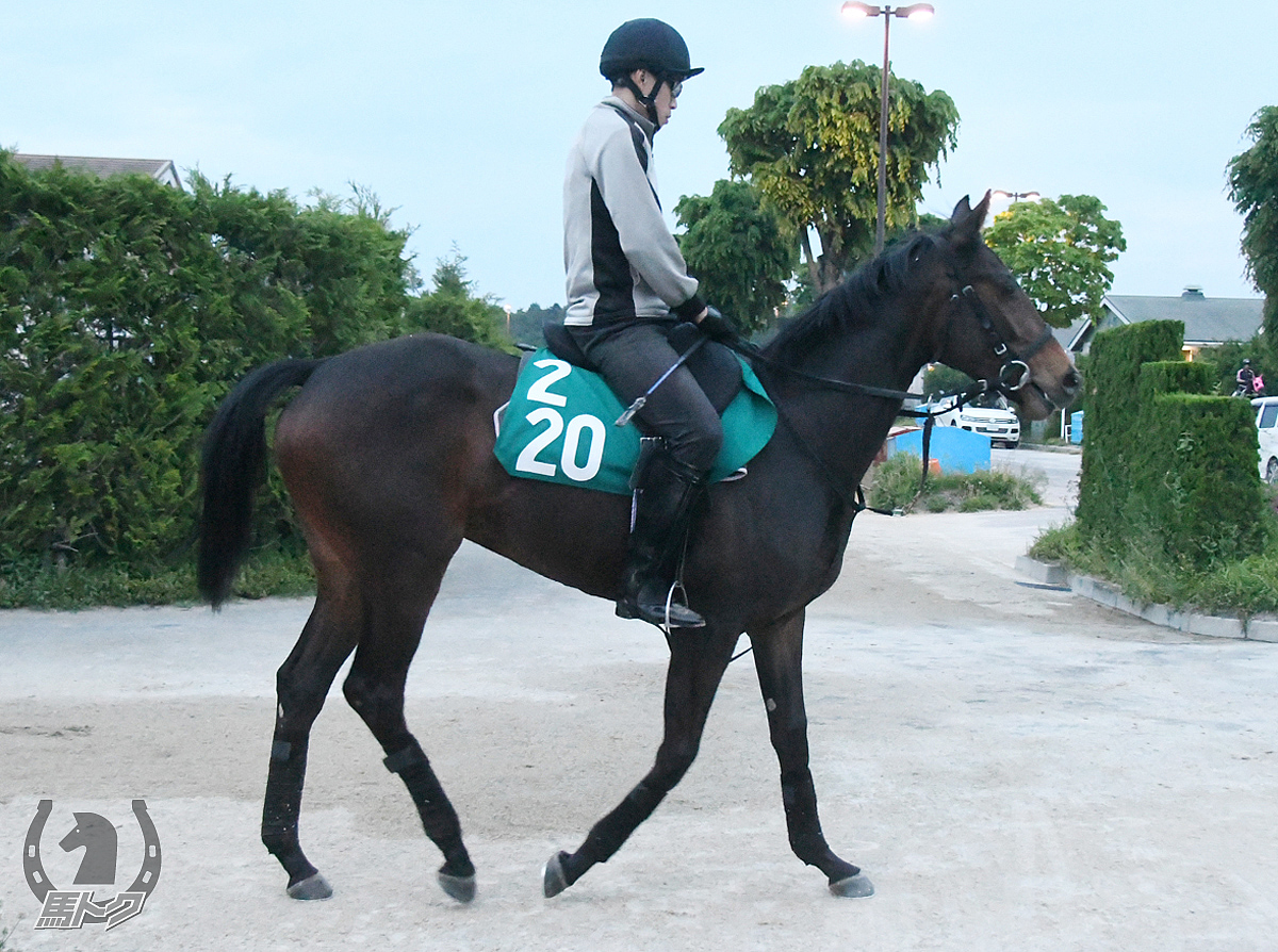 アレーテスの馬体写真