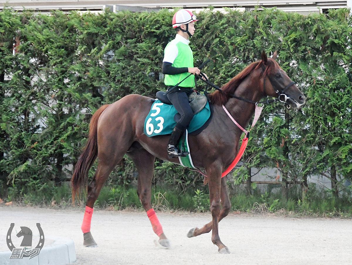 ハイリミットゾーンの馬体写真