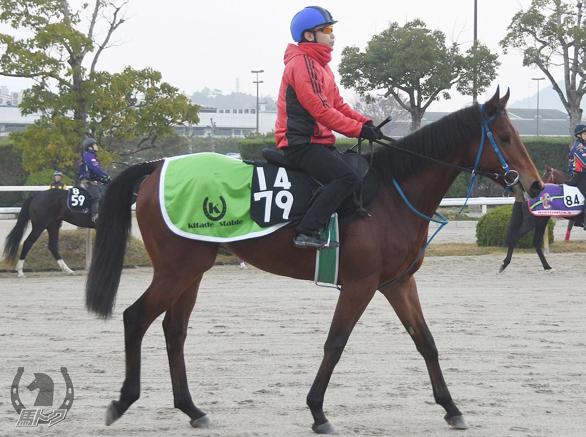 カイザーミノルの馬体写真