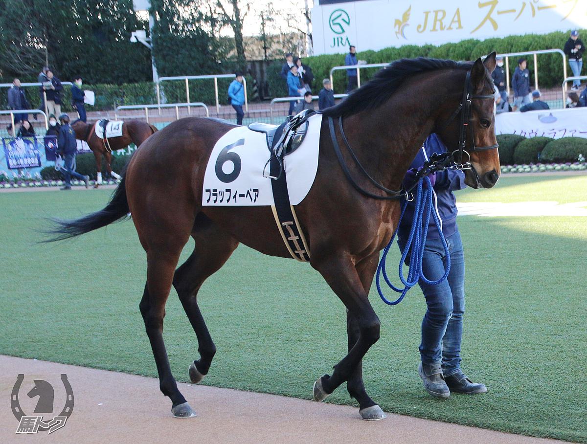フラッフィーベアの馬体写真