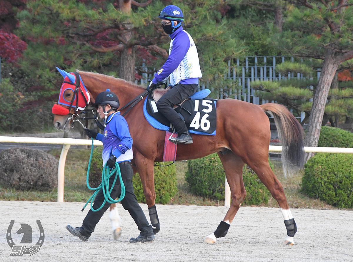 ゼットレオの馬体写真