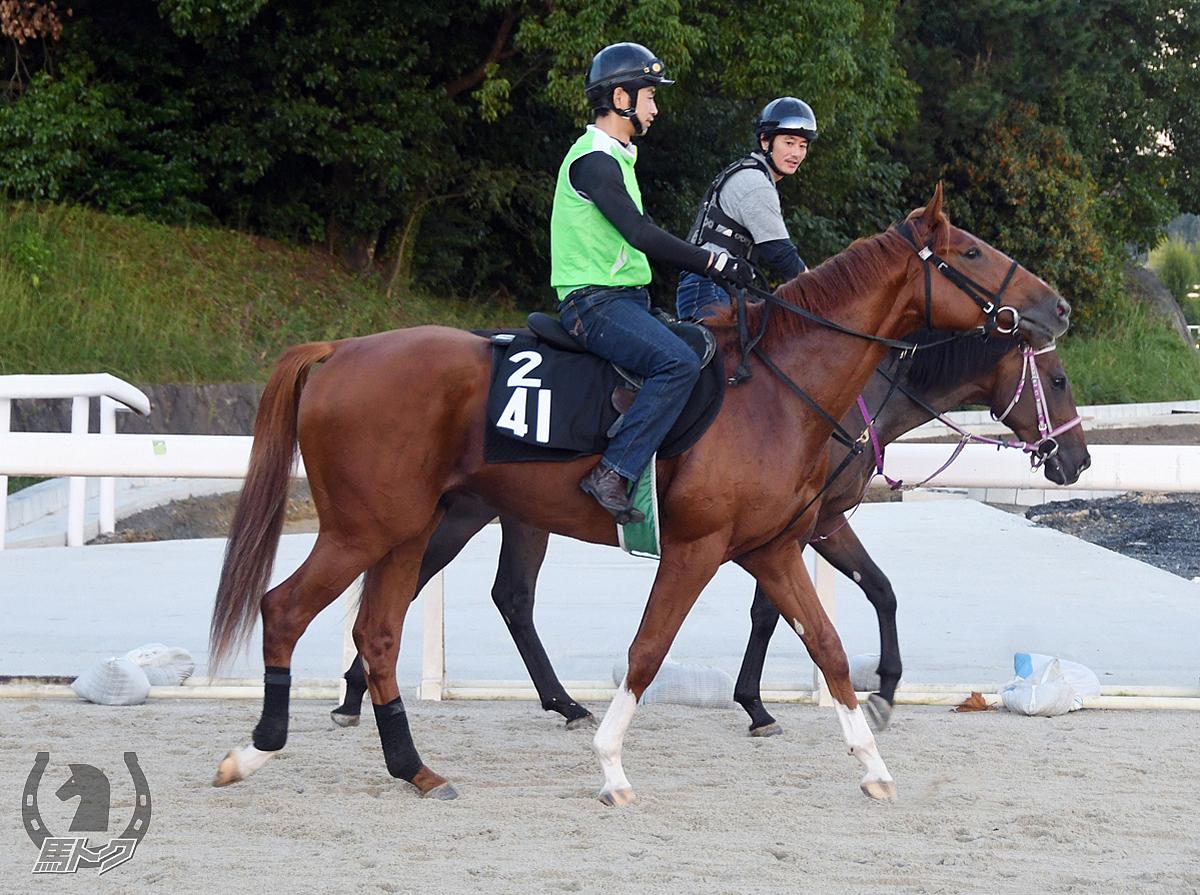 カルロスミノルの馬体写真