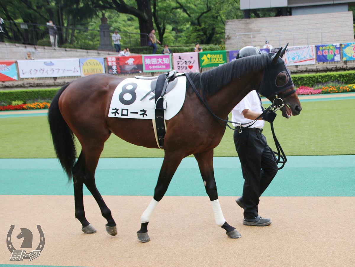 ネローネの馬体写真