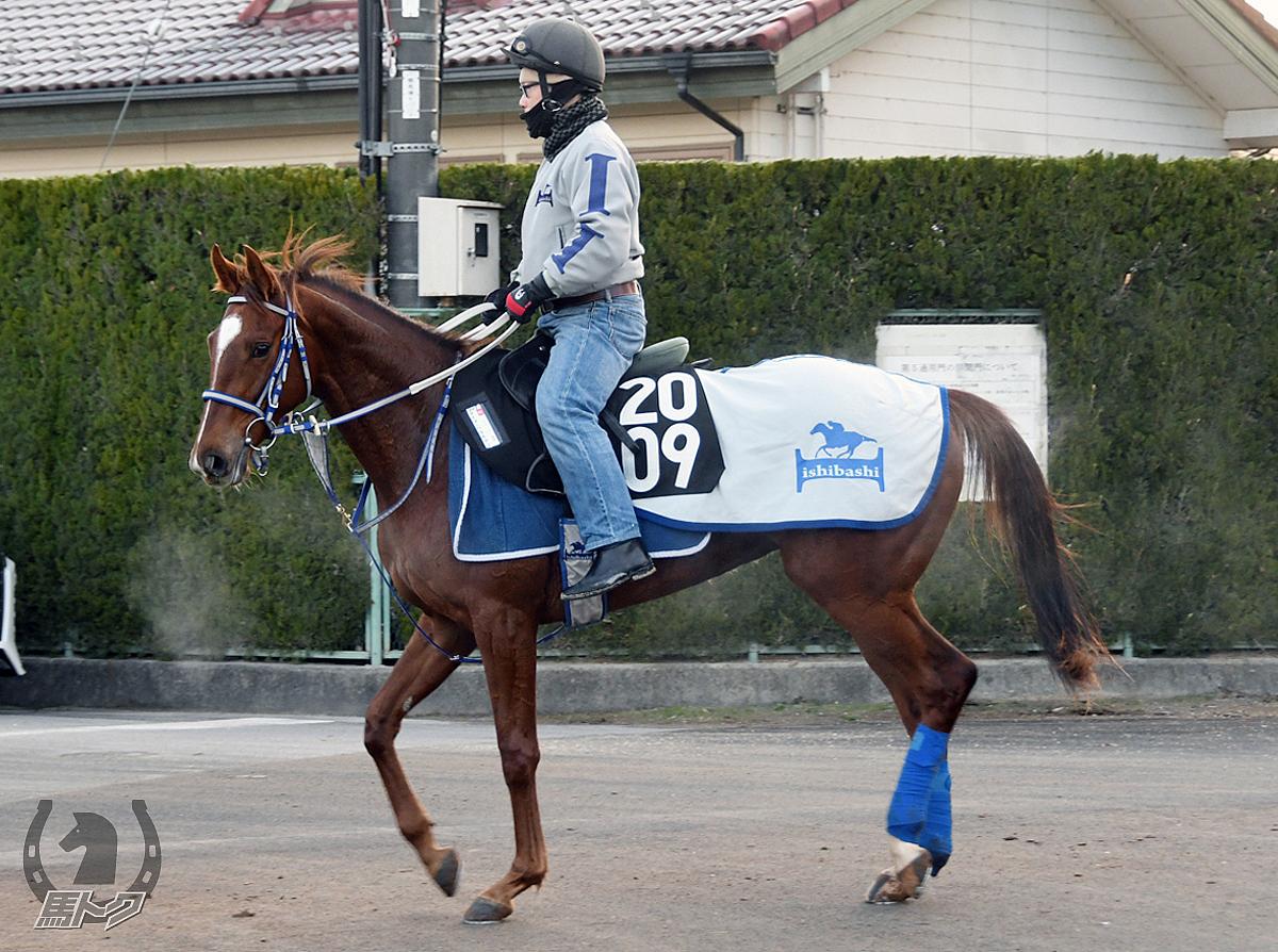 マイマーベラスワンの馬体写真