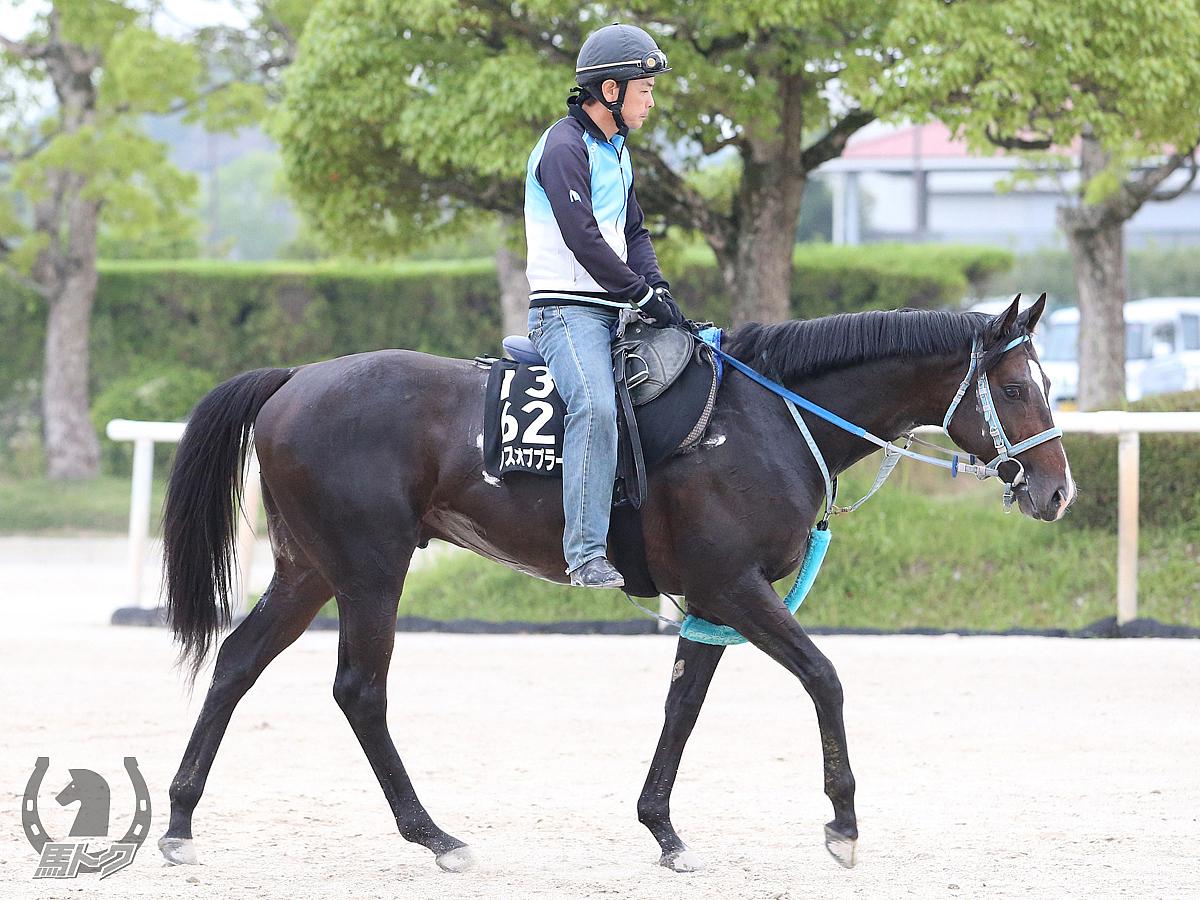 ランスオブプラーナの馬体写真