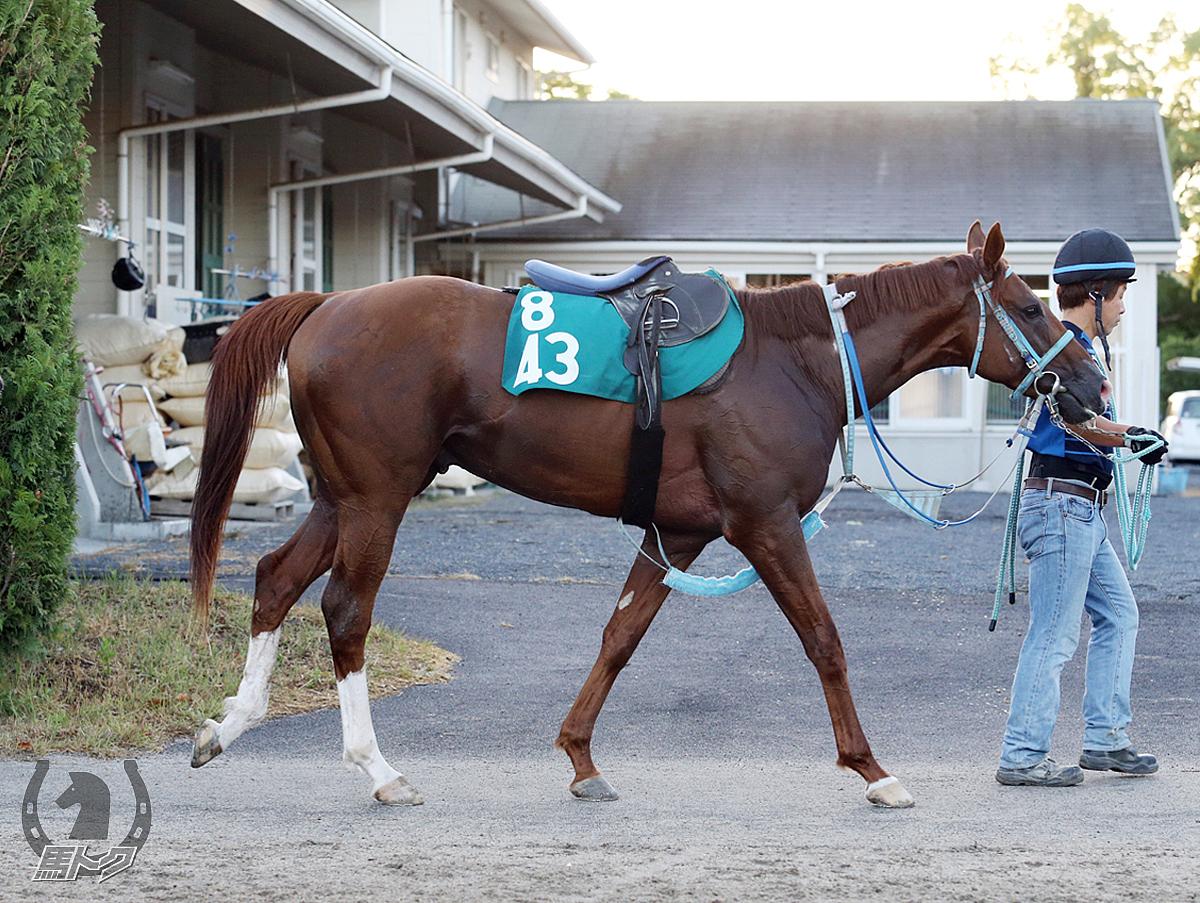 レクスミノルの馬体写真