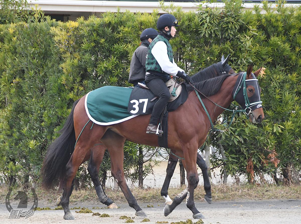 アッシェンプッテルの馬体写真