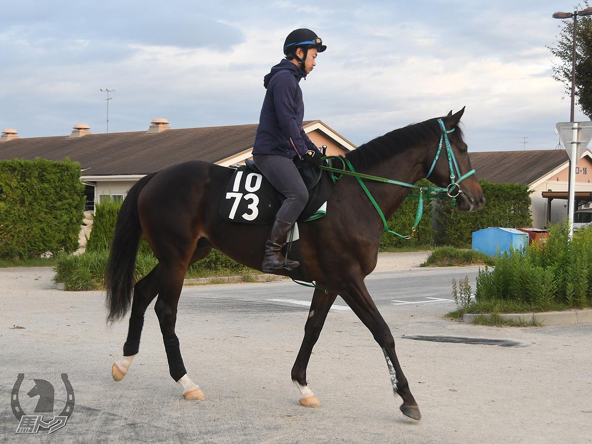 ヤマカツマッハの馬体写真