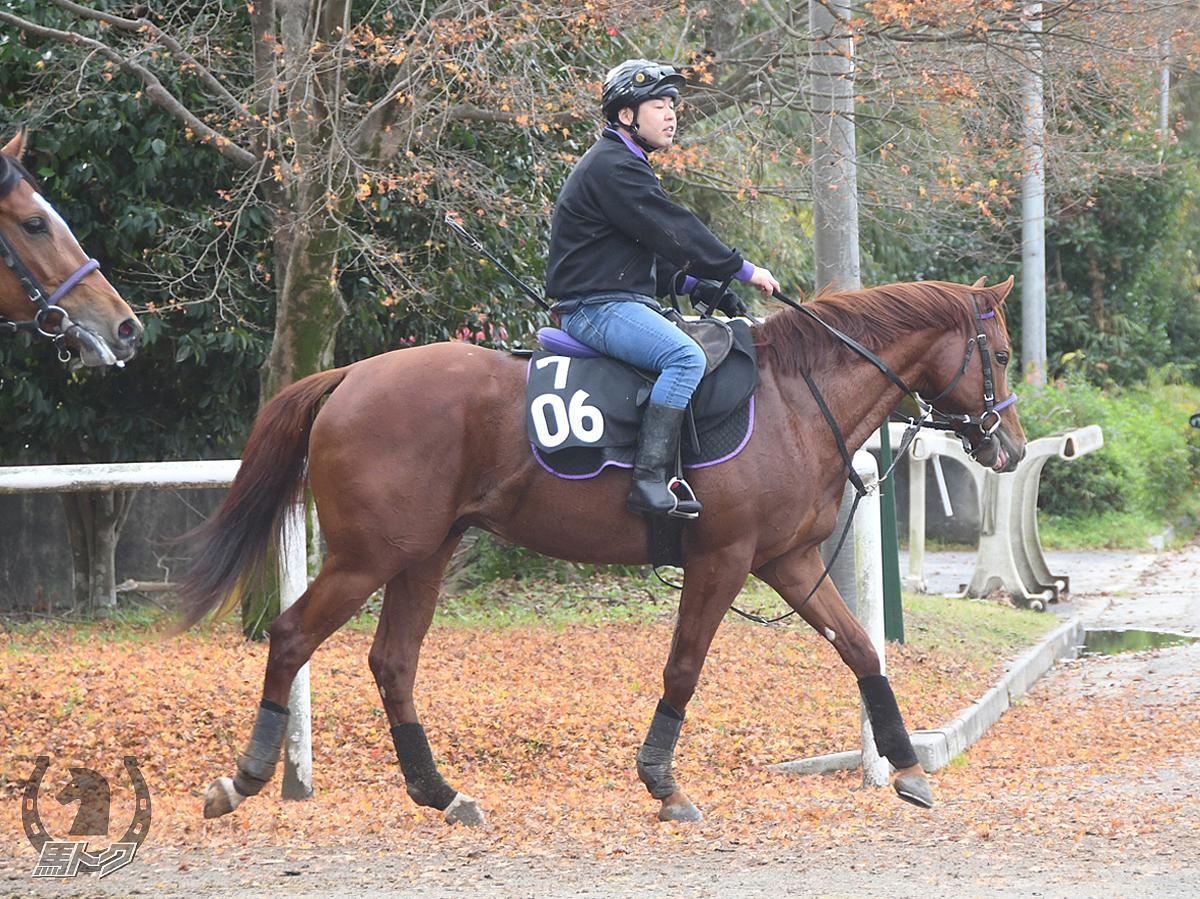 トランスフォームの馬体写真