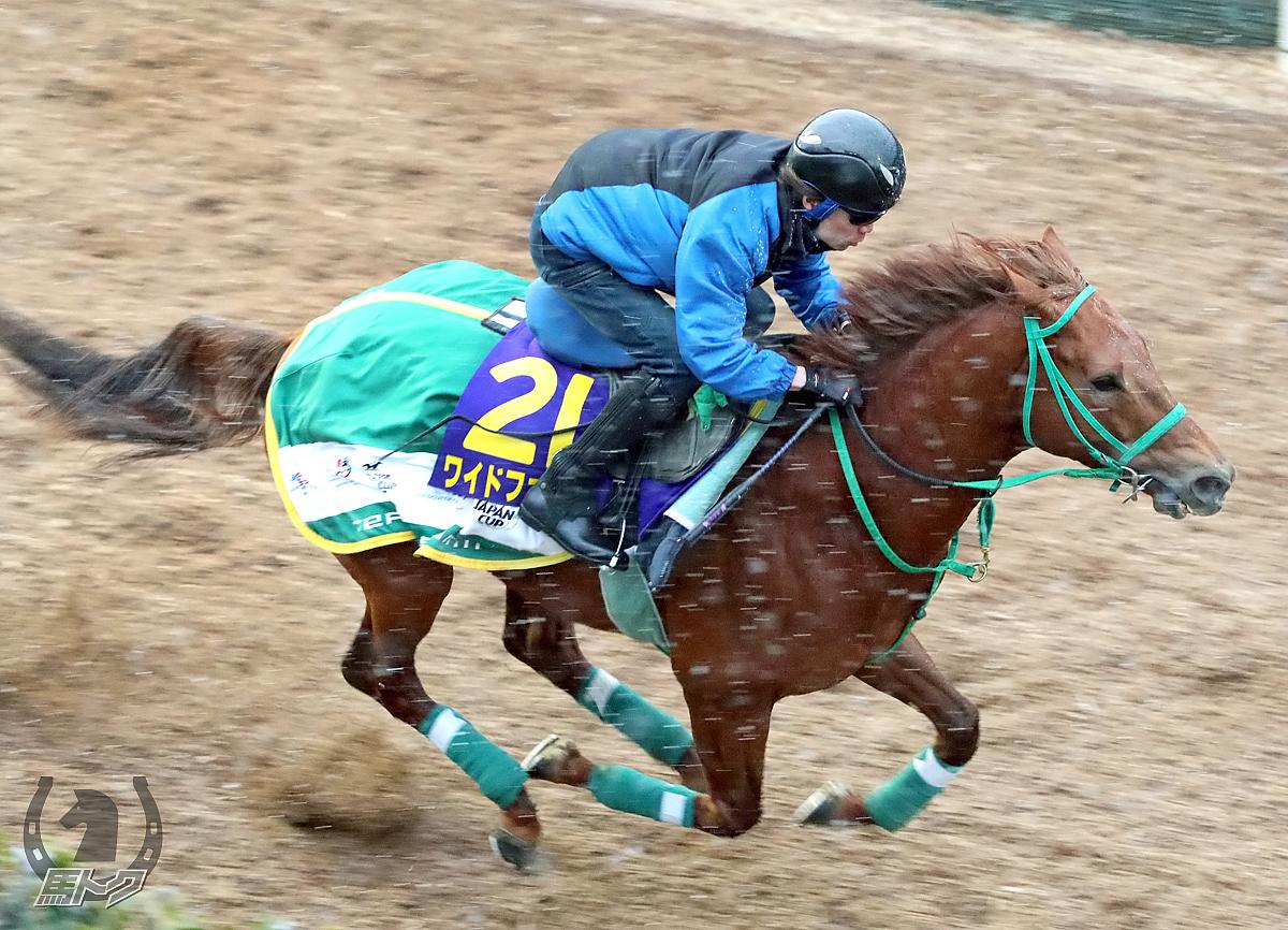 ワイドファラオの馬体写真