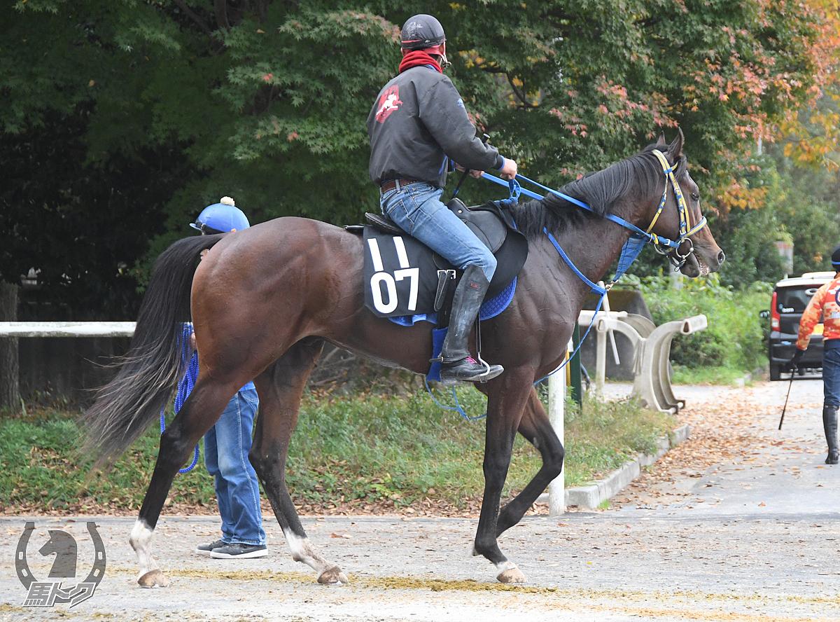 ラプタスの馬体写真