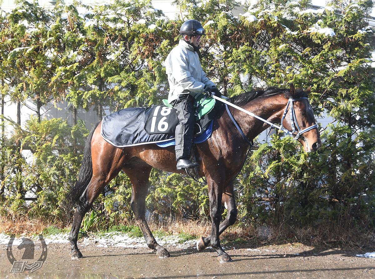 サンライズゼノンの馬体写真
