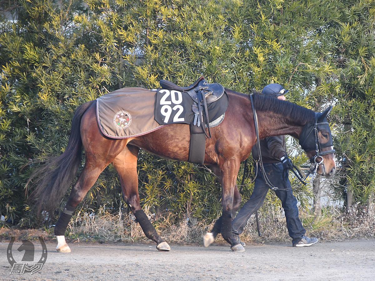 カークソングの馬体写真