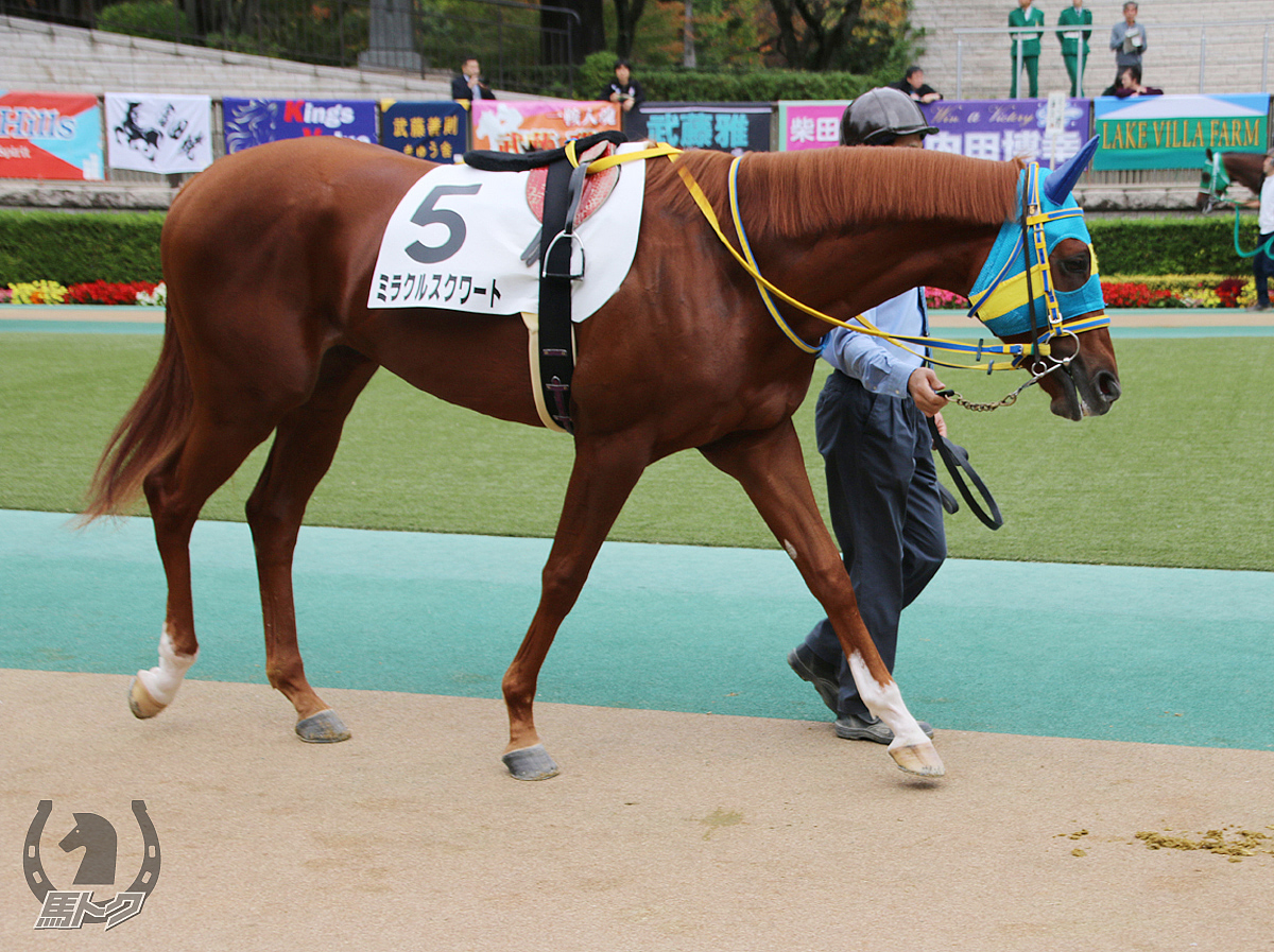 ミラクルスクワートの馬体写真