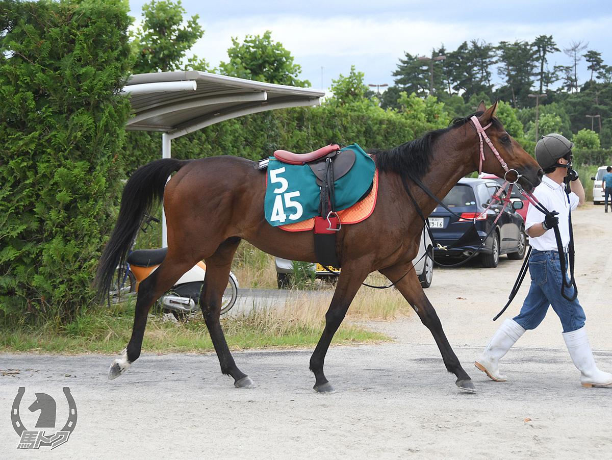リネンワンラインの馬体写真