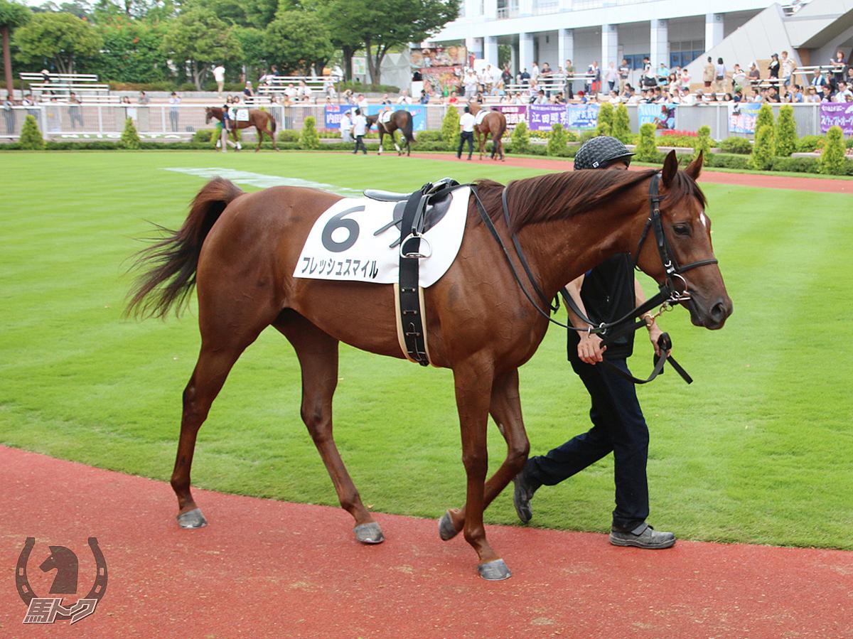 フレッシュスマイルの馬体写真