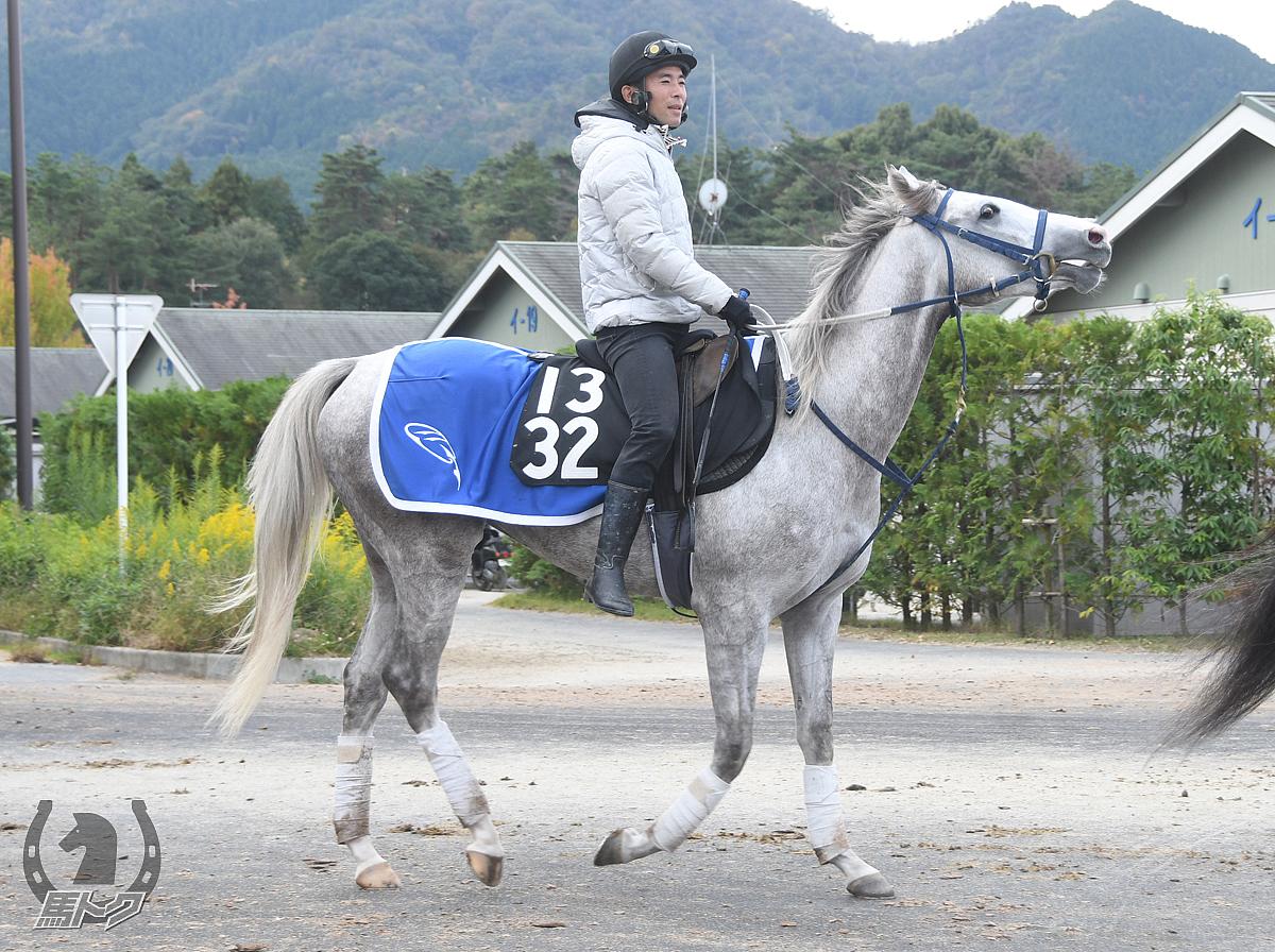 シルバークレインの馬体写真