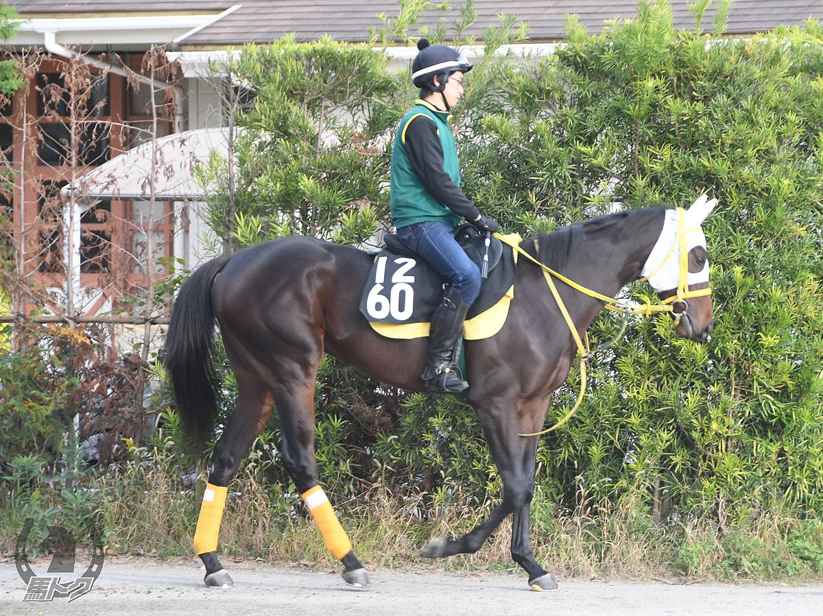 ラテントパワーズの馬体写真