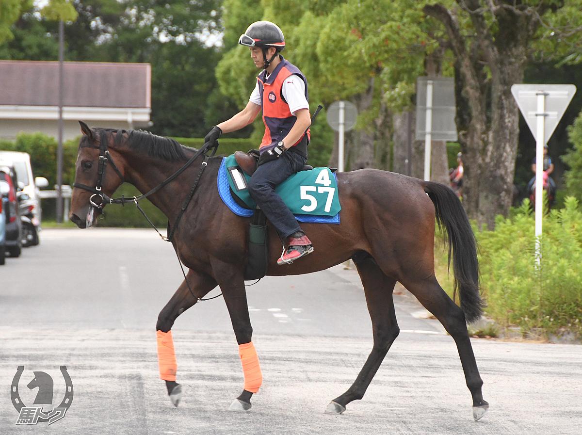 テイエムファイターの馬体写真