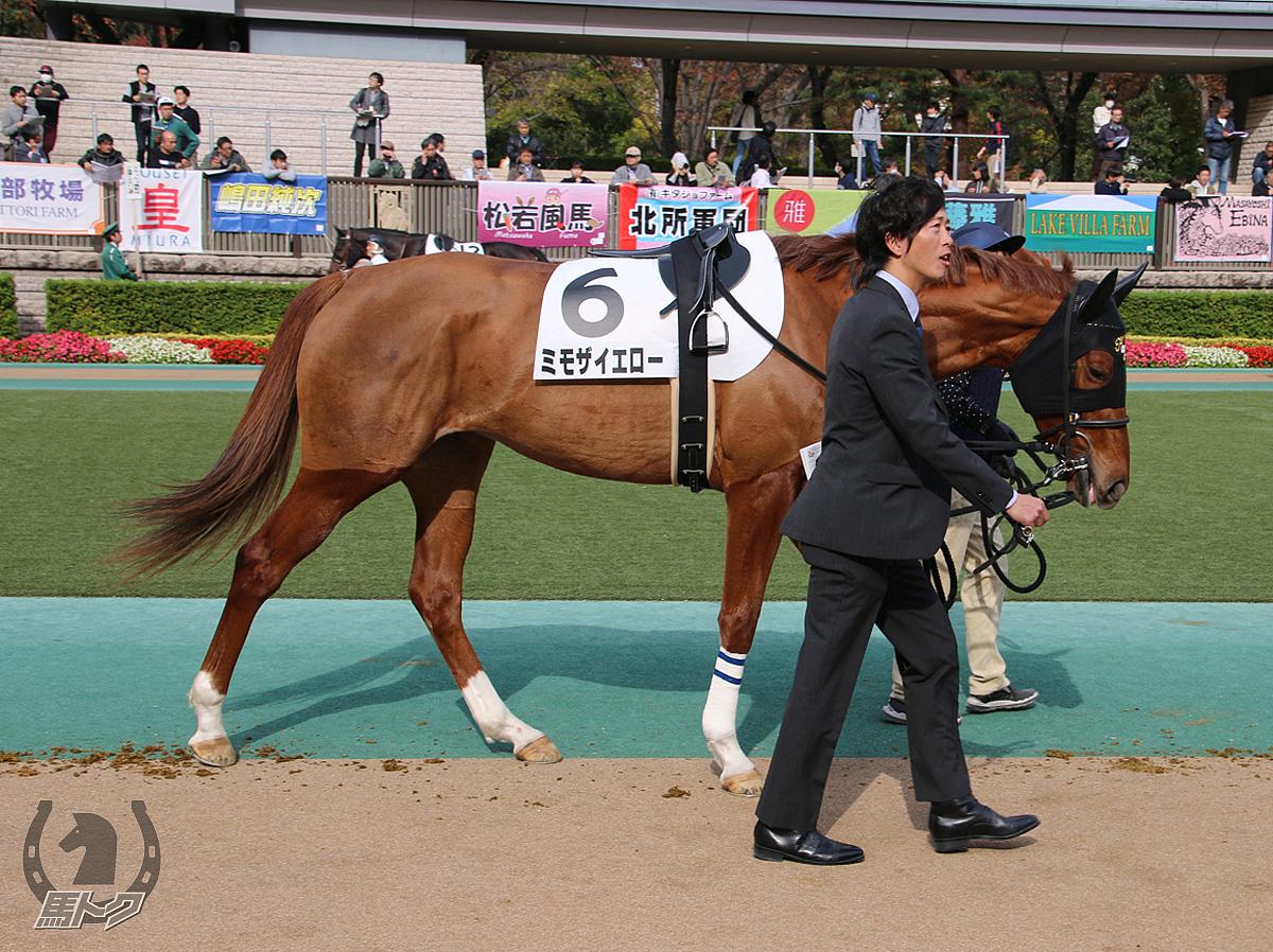 ミモザイエローの馬体写真