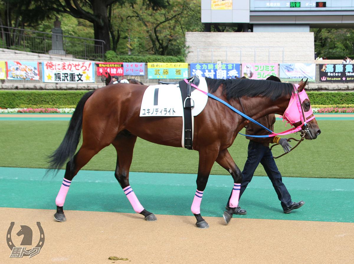 ユキノディライトの馬体写真
