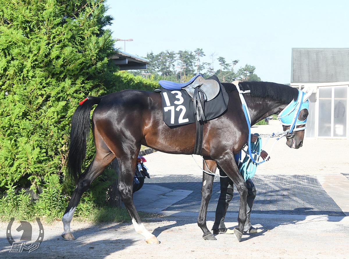 コンボルブルスの馬体写真