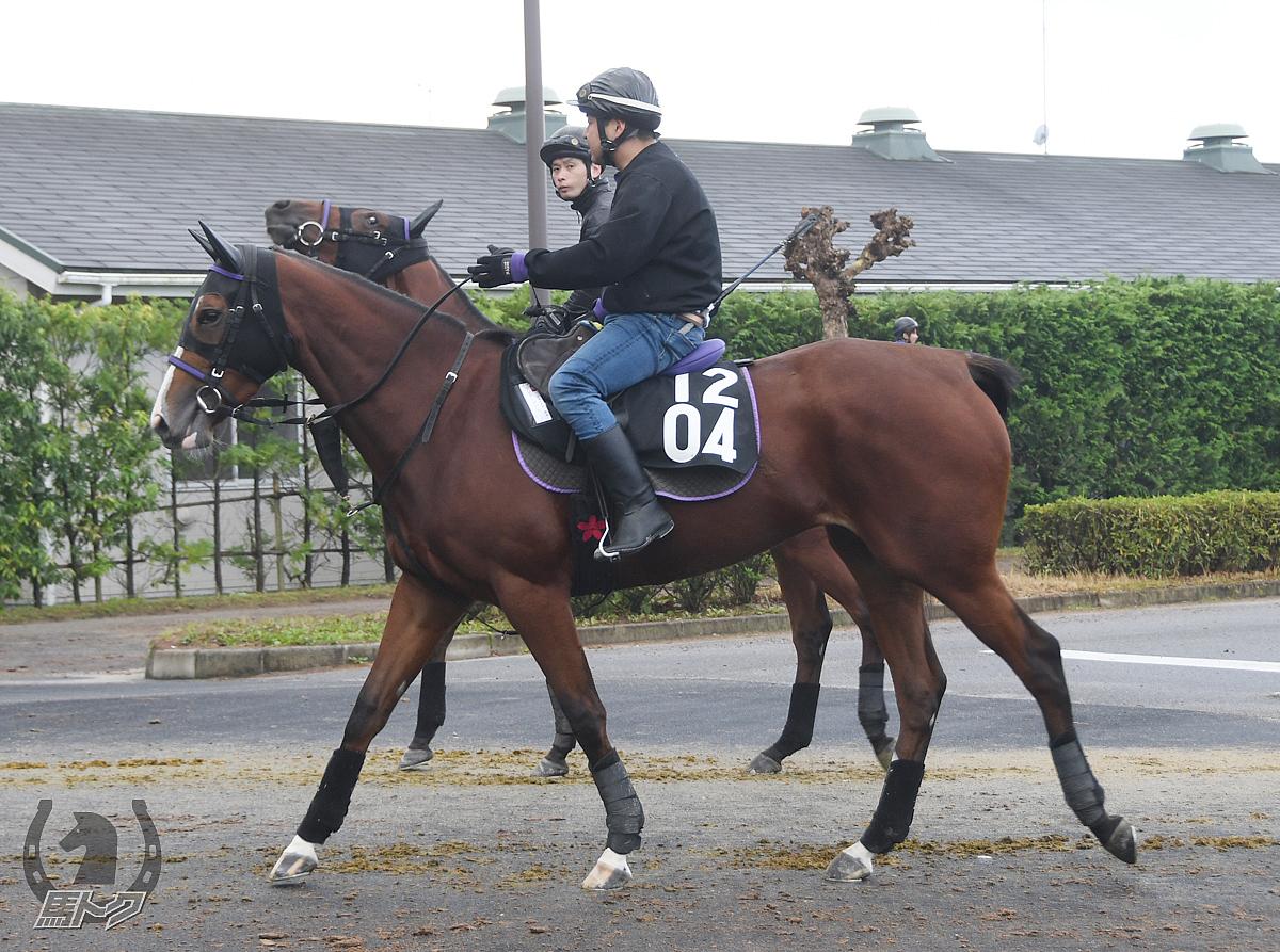 ワンダーワークの馬体写真