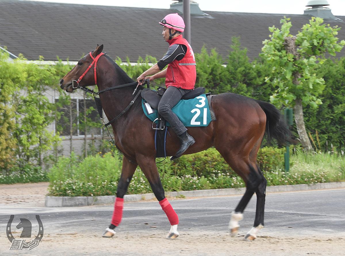 ウチュウセンカンの馬体写真