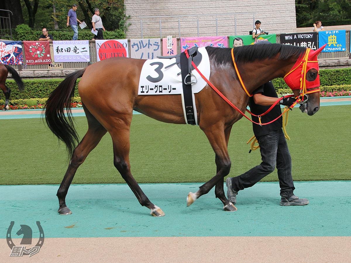 エリーグローリーの馬体写真