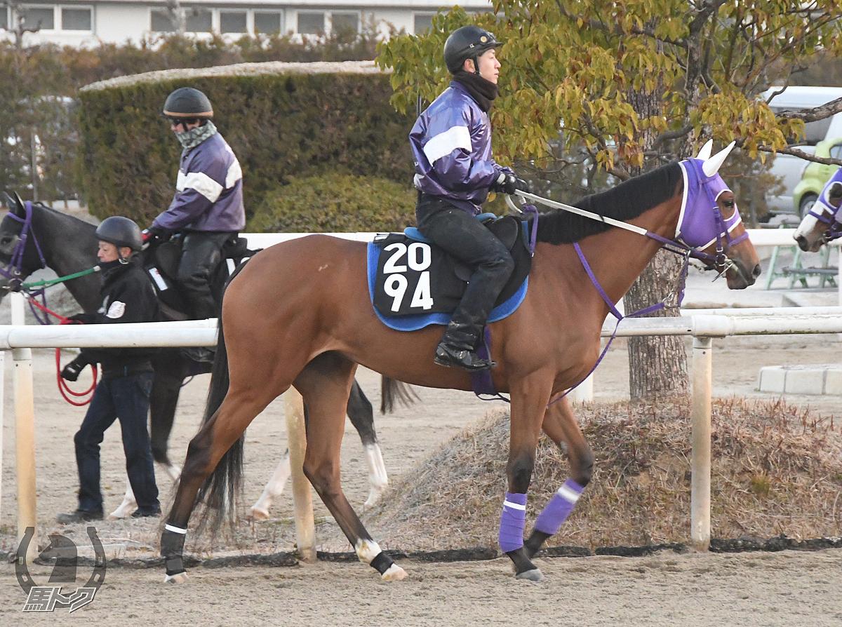 メイショウサガノの馬体写真