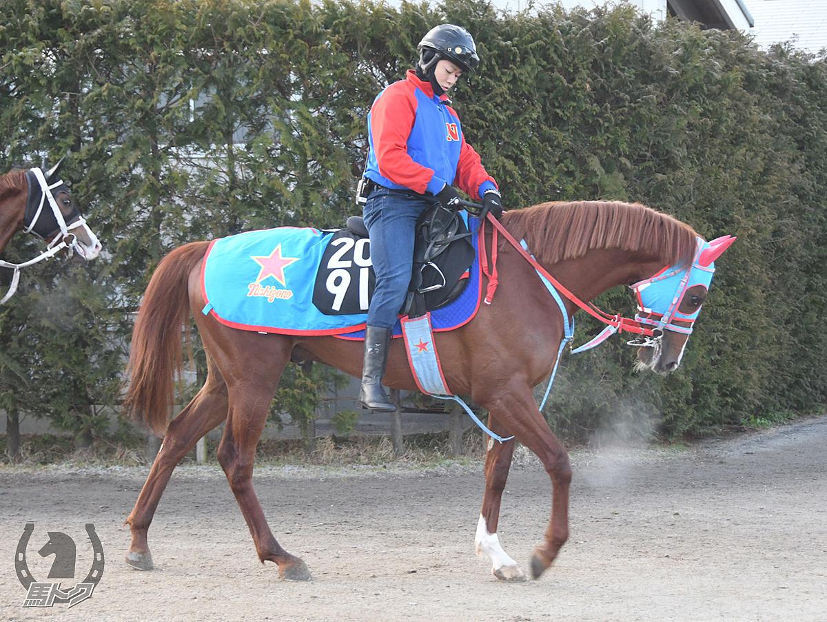 ハクサンカイザーの馬体写真