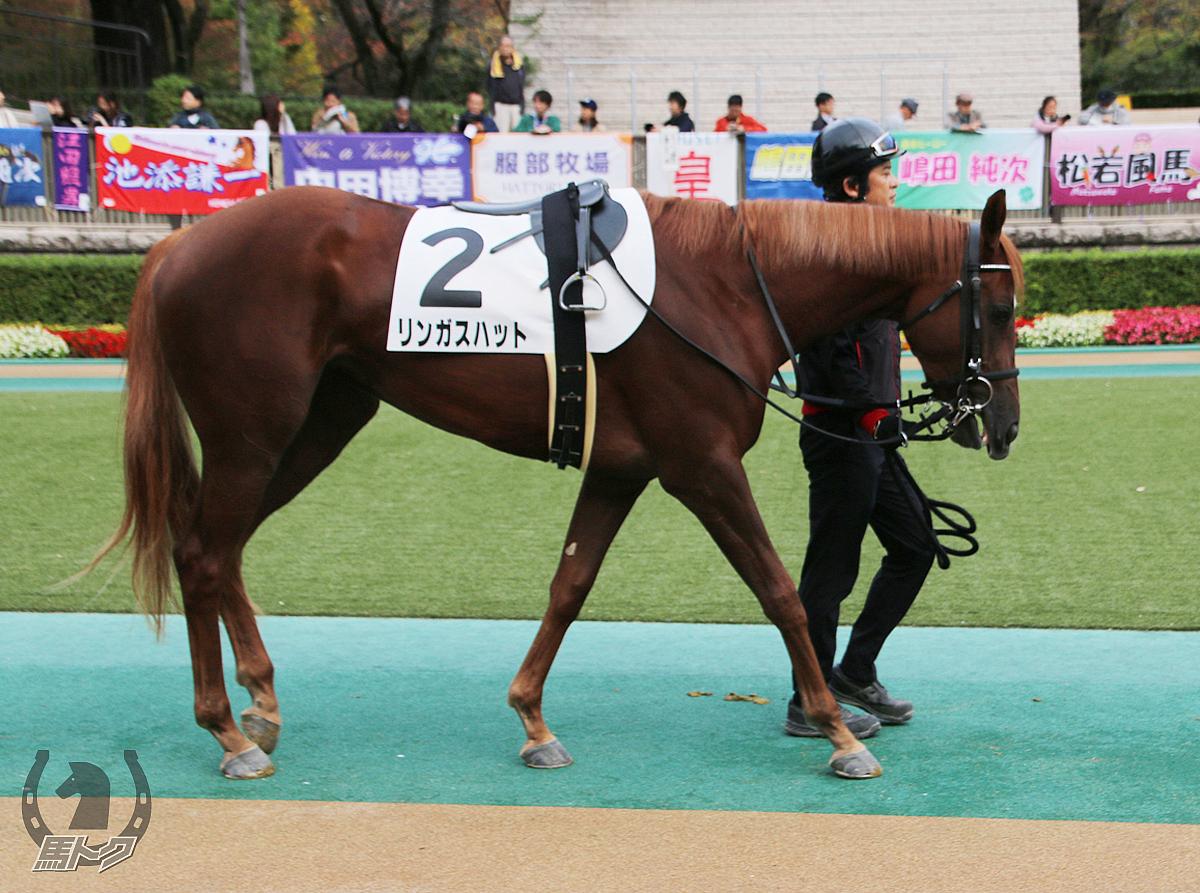 リンガスハットの馬体写真