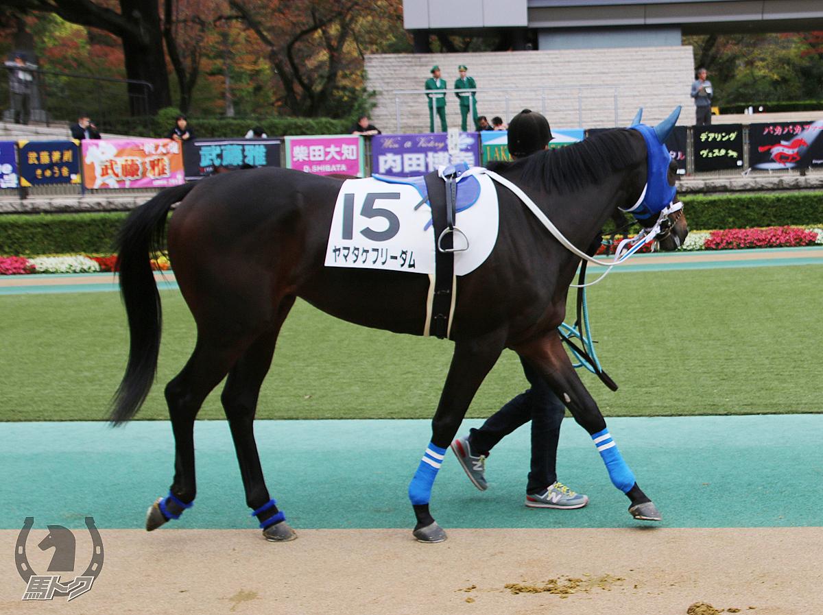 ヤマタケフリーダムの馬体写真