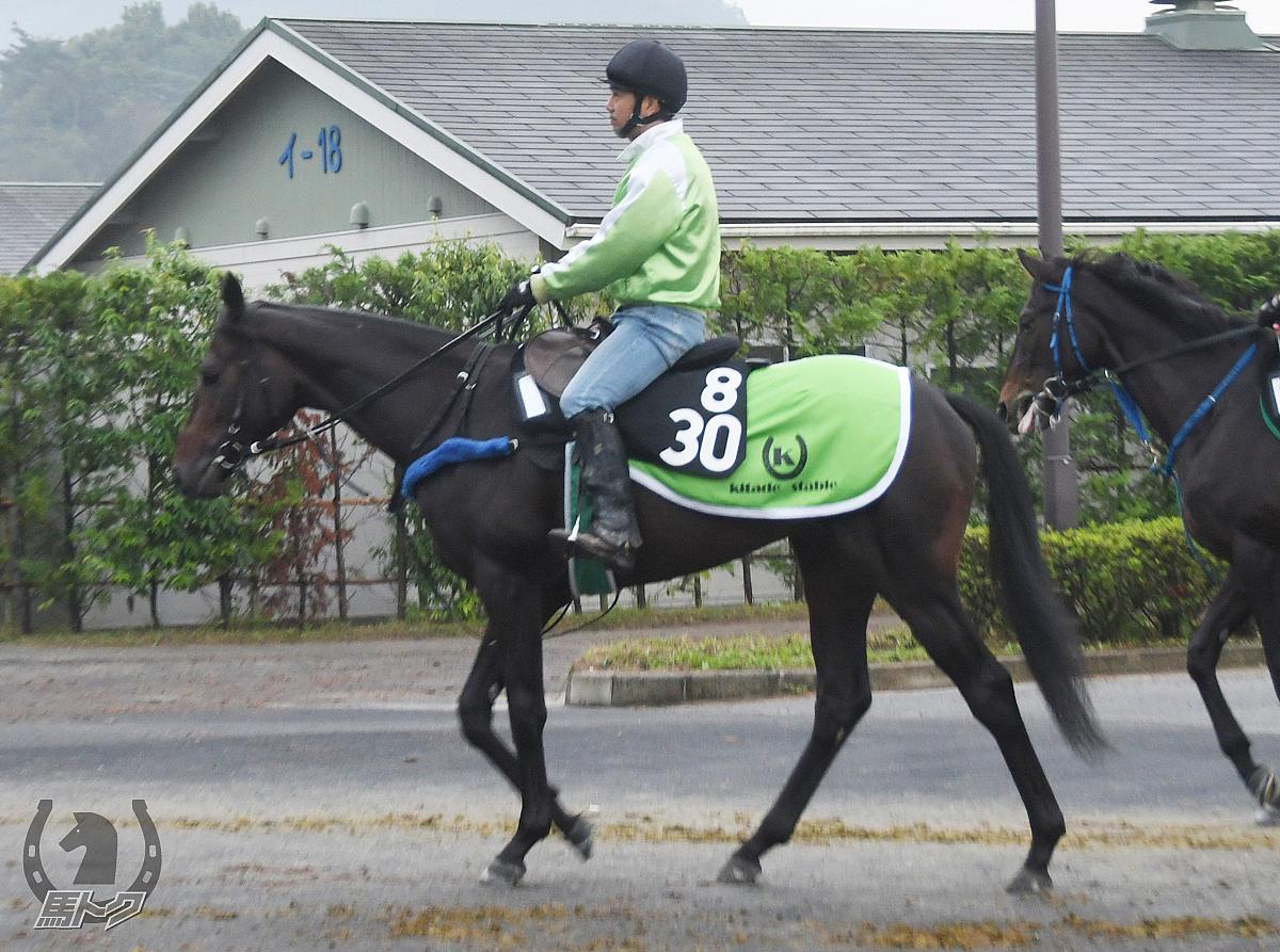 ヒロシゲヨッシーの馬体写真