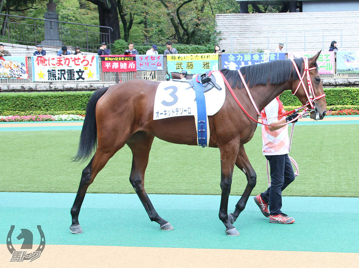 オーキッドテソーロの馬体写真