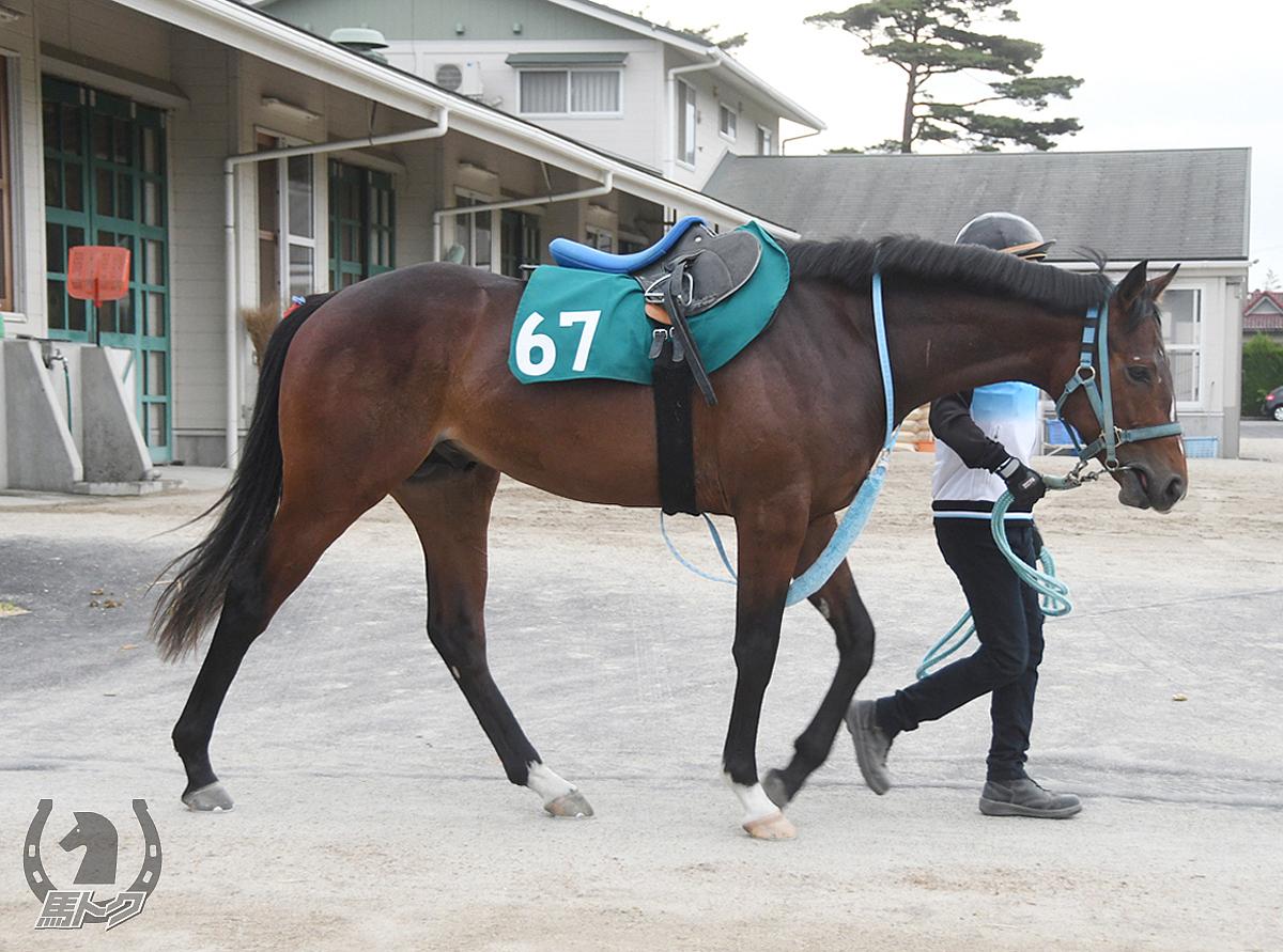 ラッキーロードの馬体写真