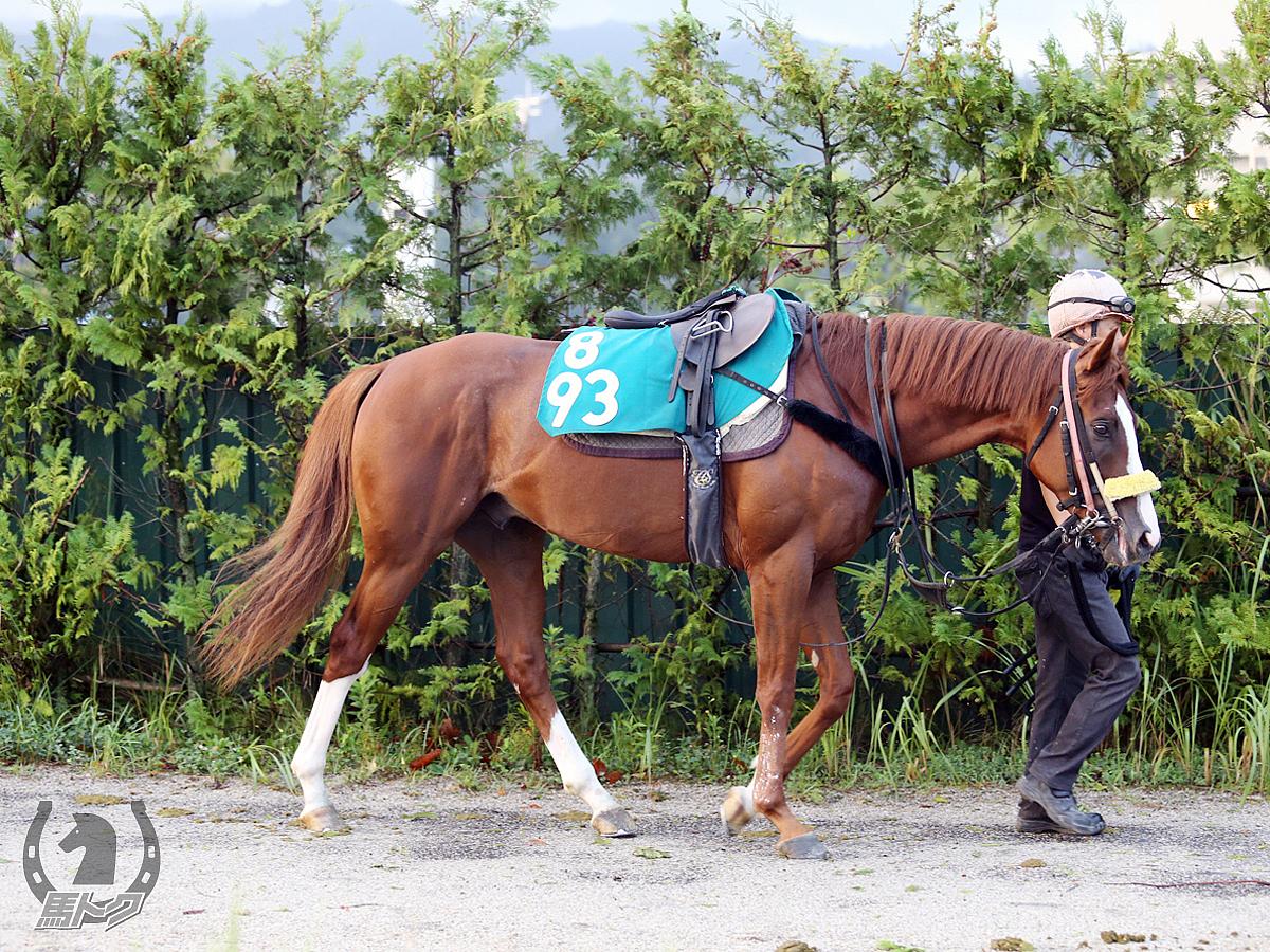 ハクサンストロングの馬体写真