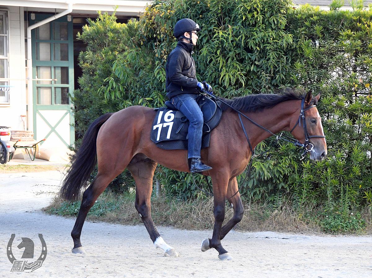 オールフォースの馬体写真