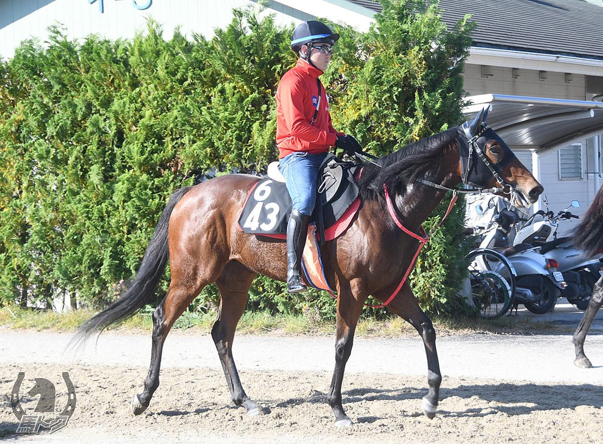 テイエムストーンの馬体写真